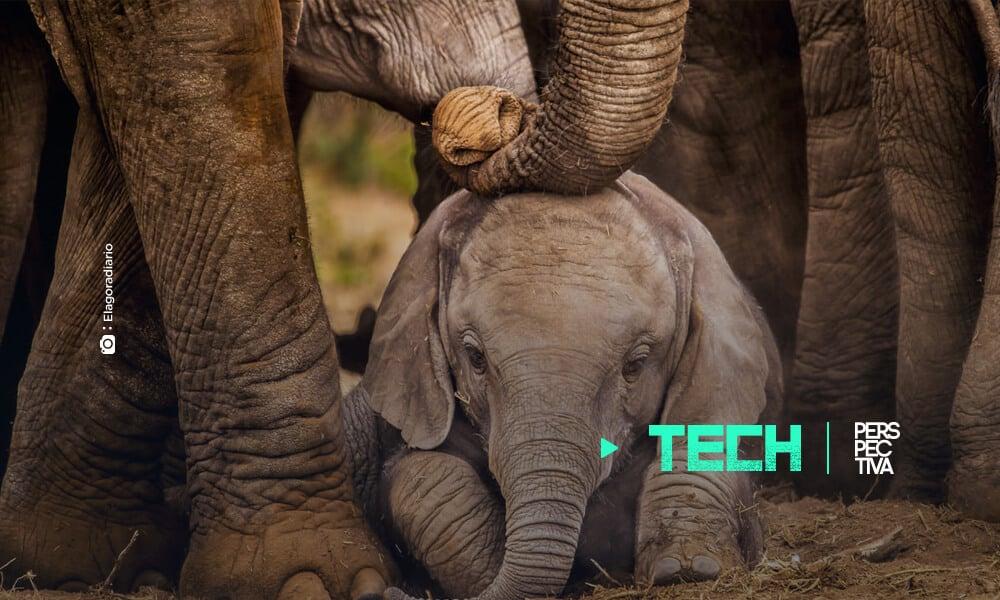 Científicos crean el primer traductor para elefantes