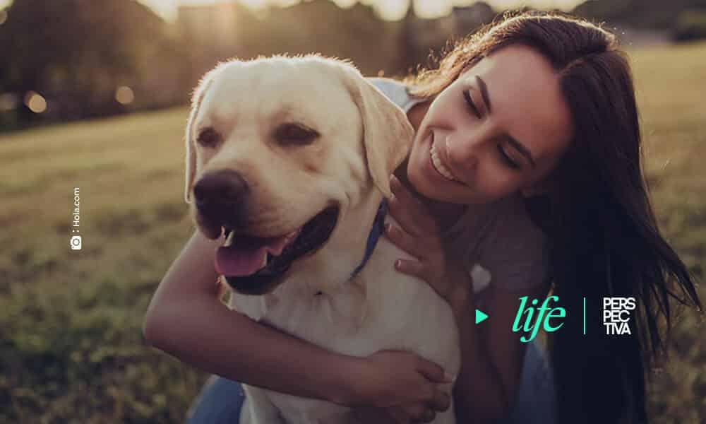 Los mejores consejos para saber cómo acariciar a un perro desconocido