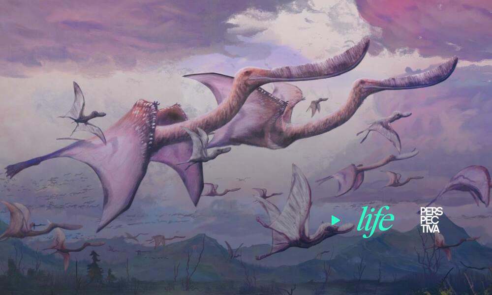 Los pterosaurios nacían con la capacidad de volar