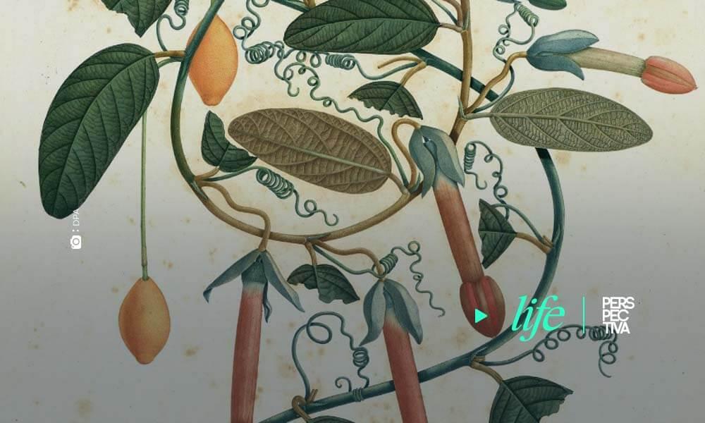 El Real Jardín Botánico exhibe 33 piezas originales de la expedición de José Celestino Mutis al Nuevo Reino de Granada